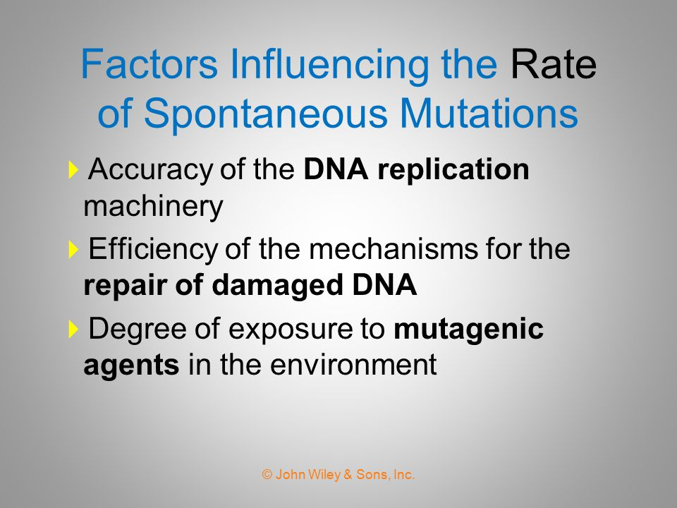 Factors Influencing the Rate of Spontaneous Mutations