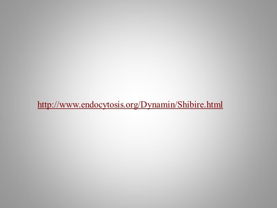 http://www.endocytosis.org/Dynamin/Shibire.html