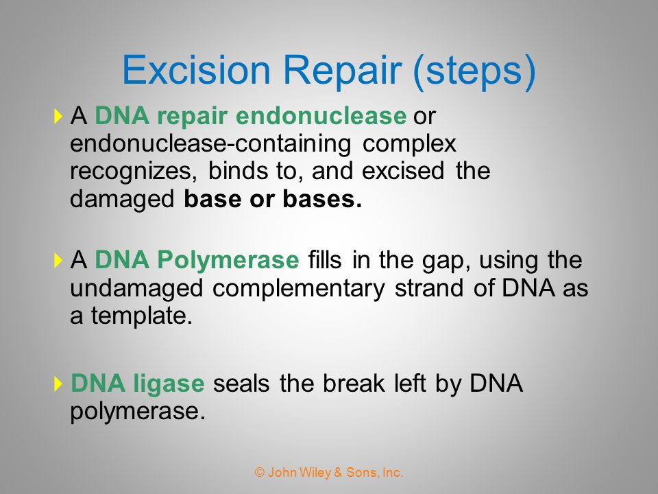 Excision Repair (steps)