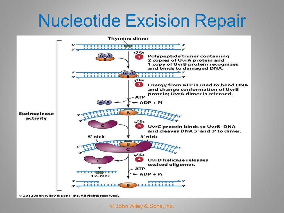 Nucleotide Excision Repair