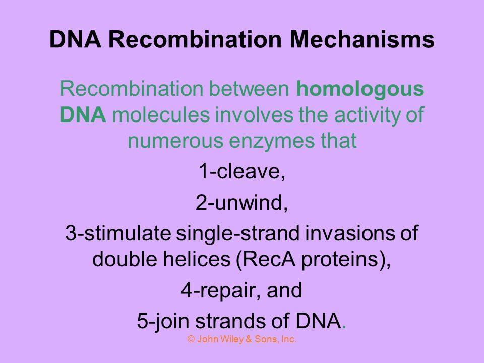 DNA Recombination Mechanisms