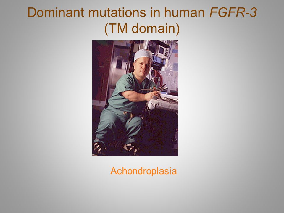 Dominant mutations in human FGFR-3 (TM domain)