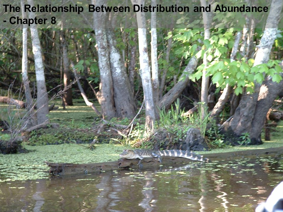 The Relationship Between Distribution and Abundance - Chapter 8