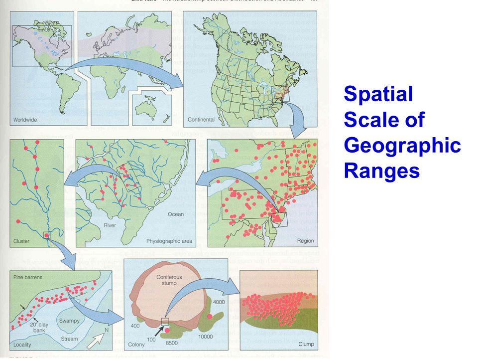 Spatial Scale of Geographic Ranges