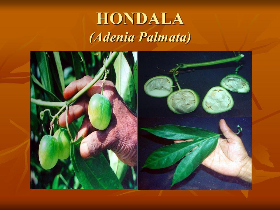 HONDALA (Adenia Palmata)