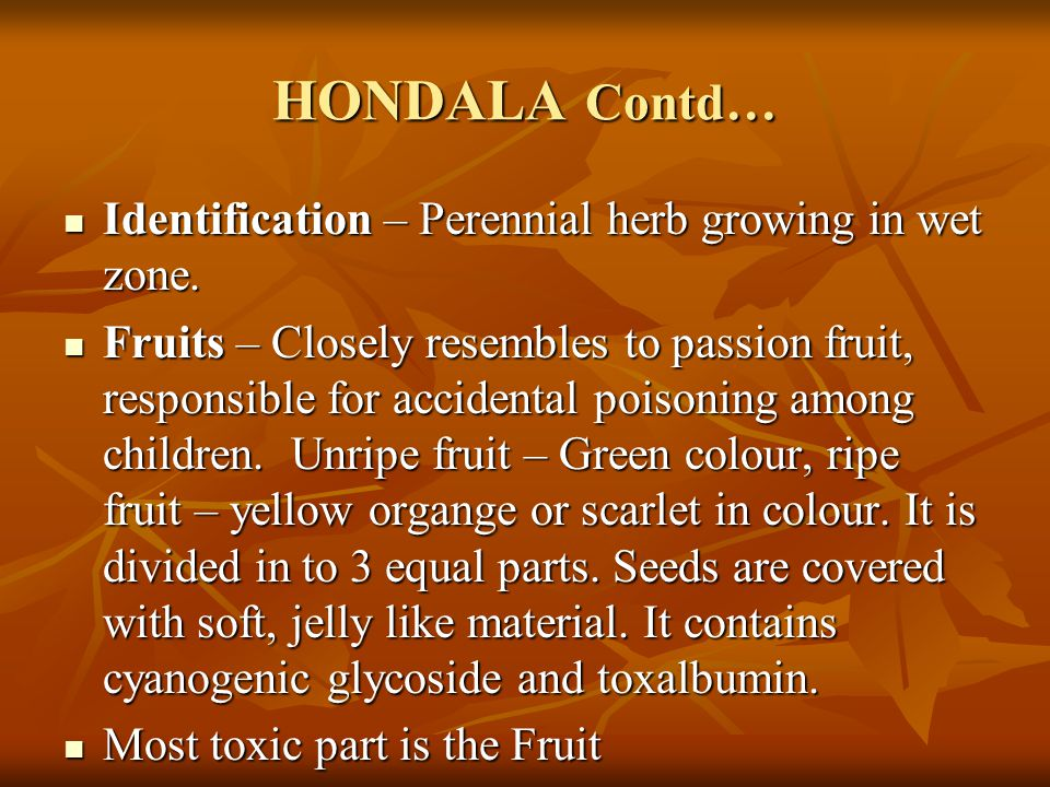 HONDALA Contd… Identification – Perennial herb growing in wet zone.