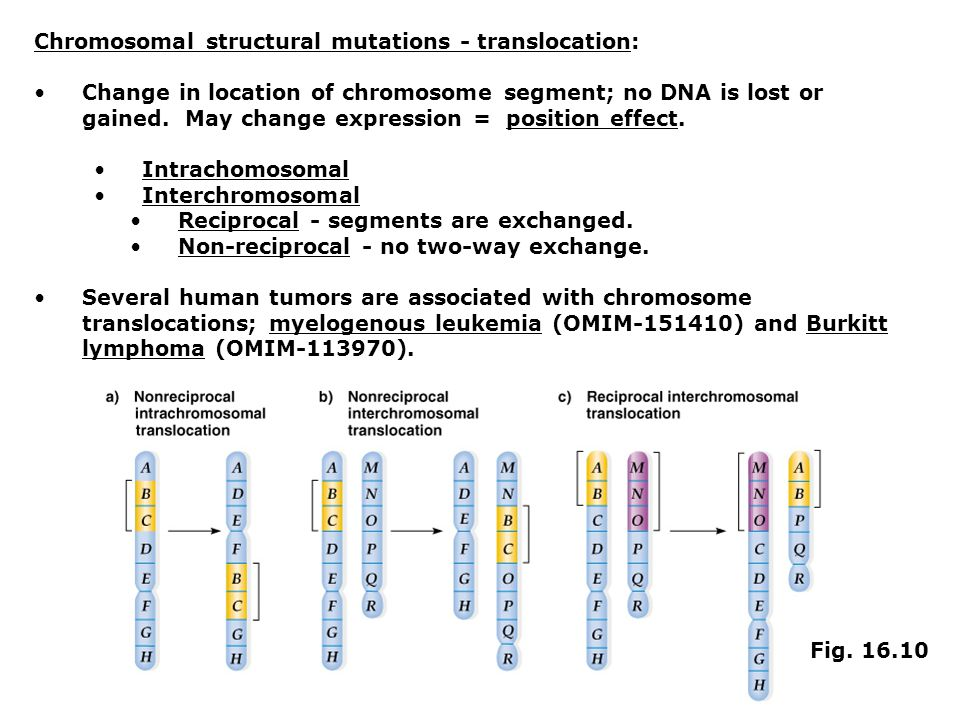 Chromosomal structural mutations - translocation: