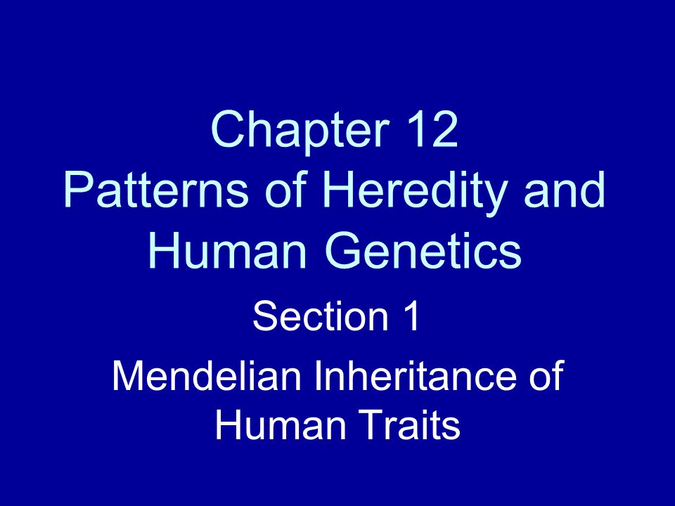 Chapter 12 Patterns Of Heredity And Human Genetics Ppt Video