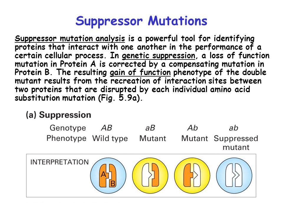 Suppressor Mutations