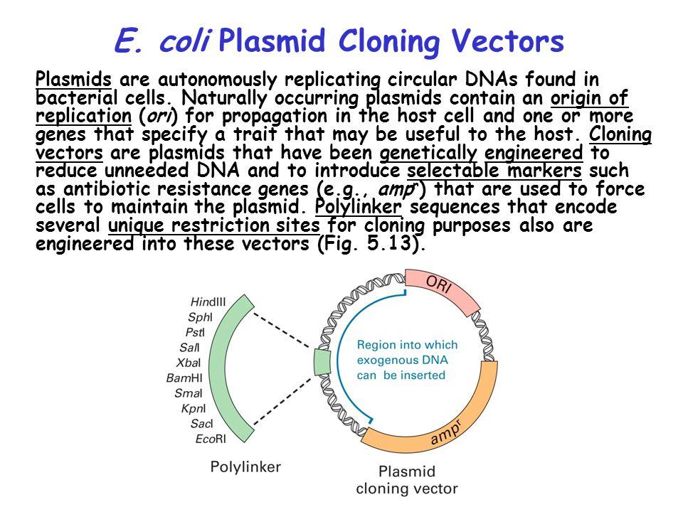 E. coli Plasmid Cloning Vectors