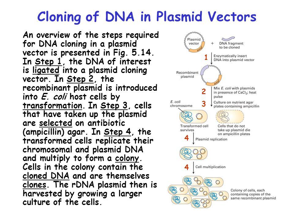 Cloning of DNA in Plasmid Vectors