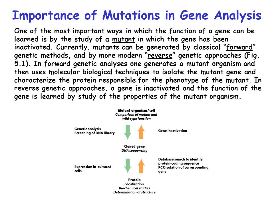 Importance of Mutations in Gene Analysis