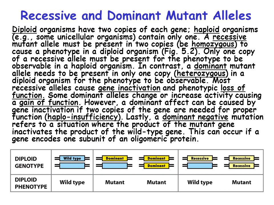 Recessive and Dominant Mutant Alleles
