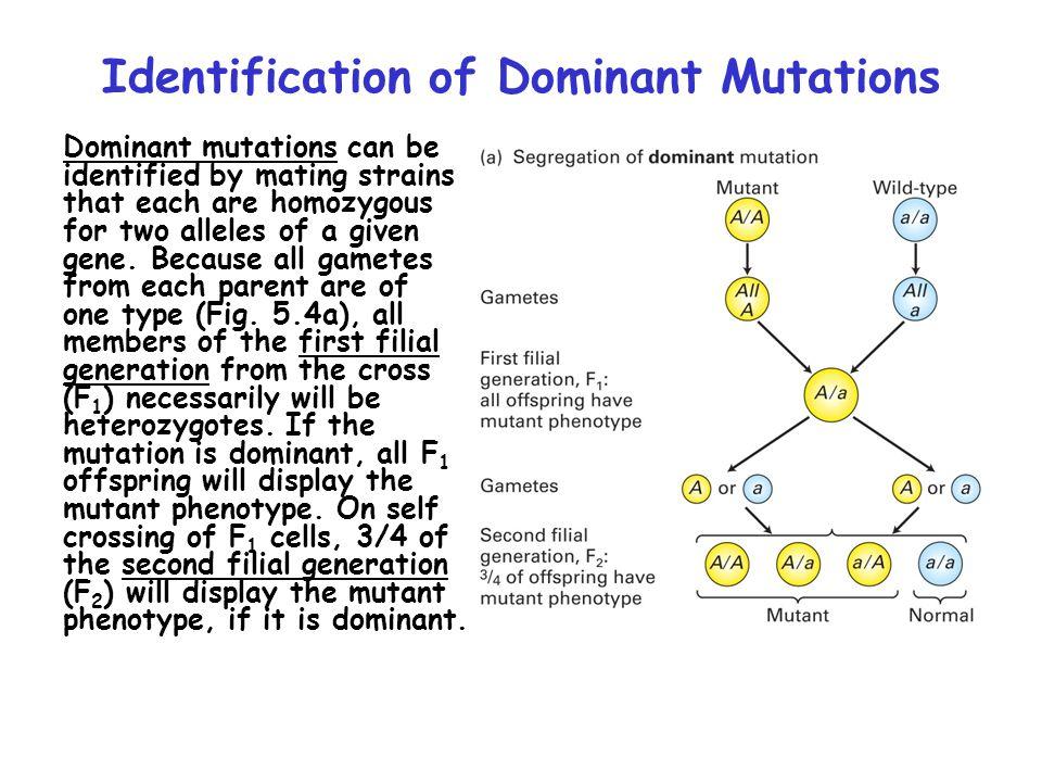 Identification of Dominant Mutations