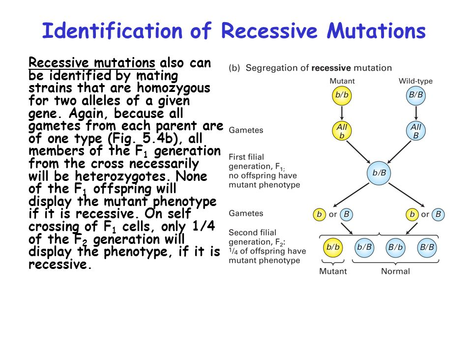 Identification of Recessive Mutations