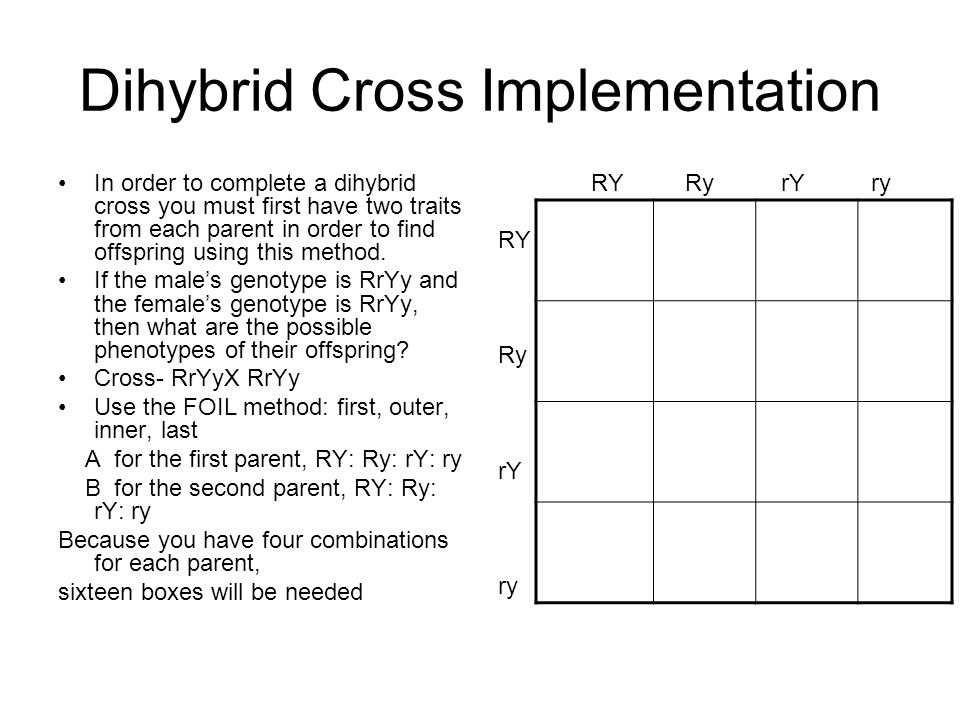 Dihybrid Cross Implementation