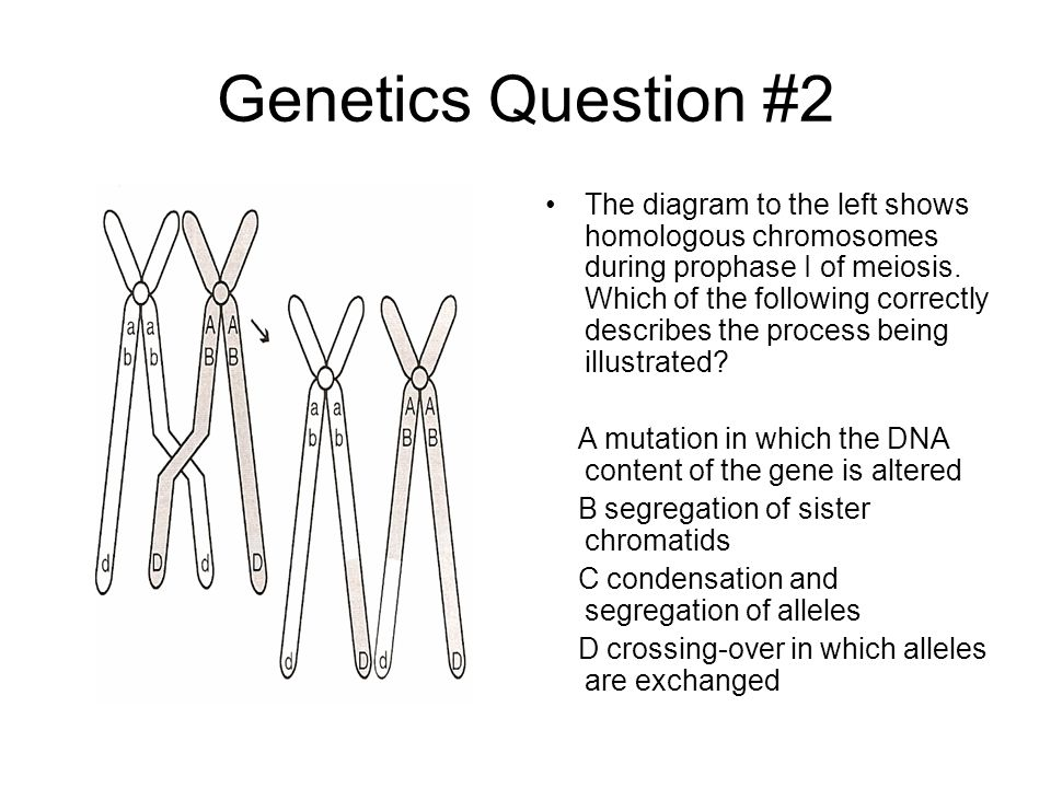 Genetics Question #2