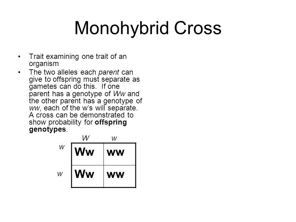 Monohybrid Cross Ww ww Trait examining one trait of an organism