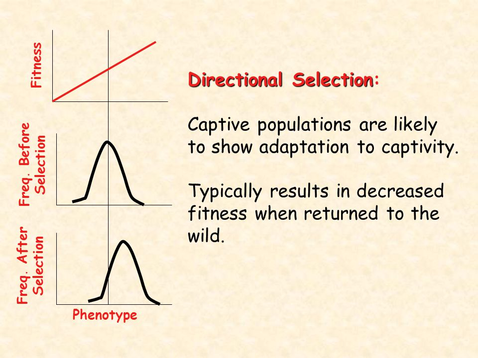 Directional Selection: Captive populations are likely