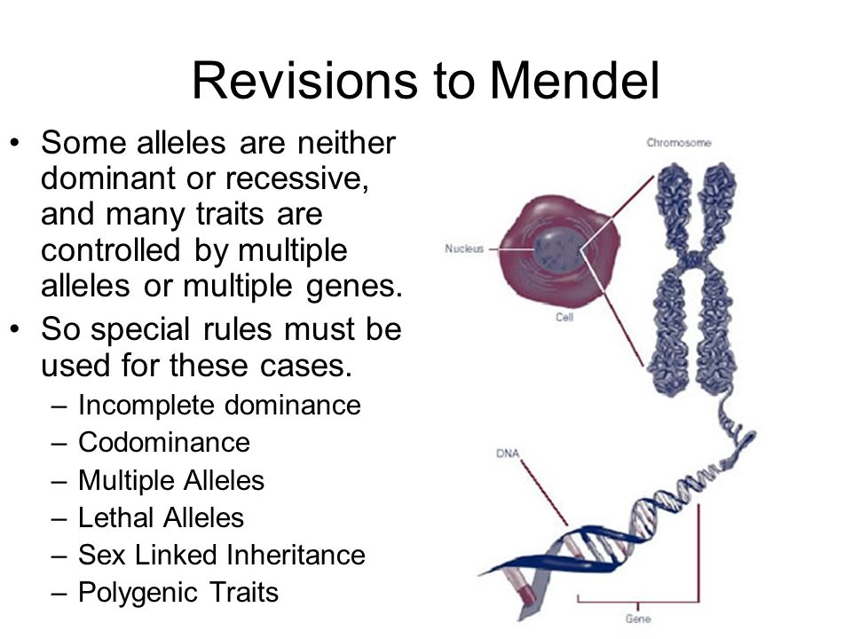 Revisions to Mendel Some alleles are neither dominant or recessive, and many traits are controlled by multiple alleles or multiple genes.