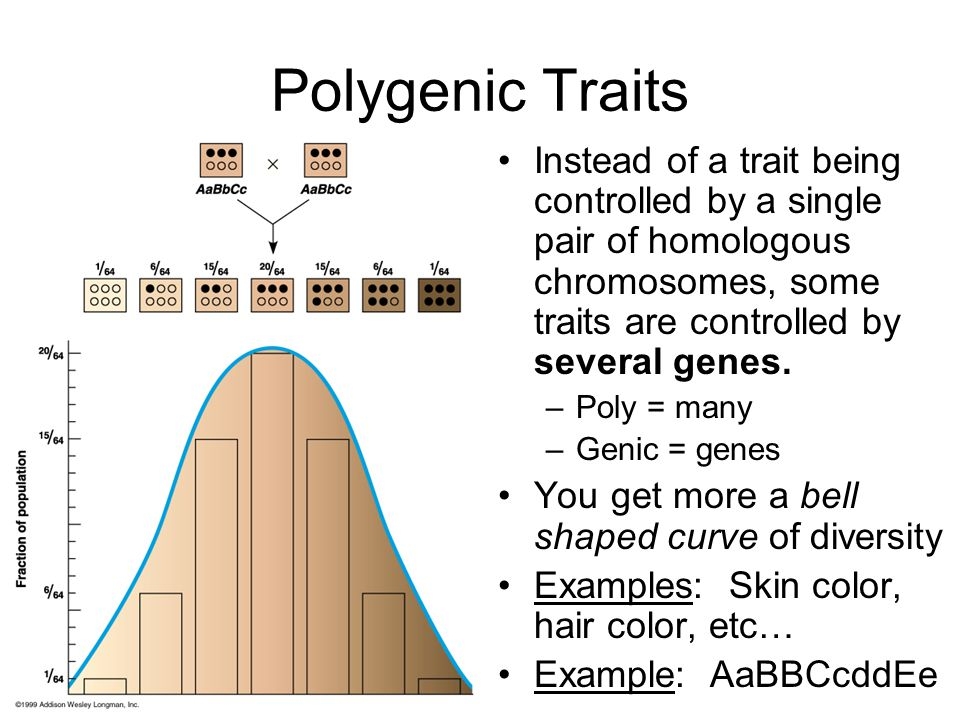 Polygenic Traits Instead of a trait being controlled by a single pair of homologous chromosomes, some traits are controlled by several genes.