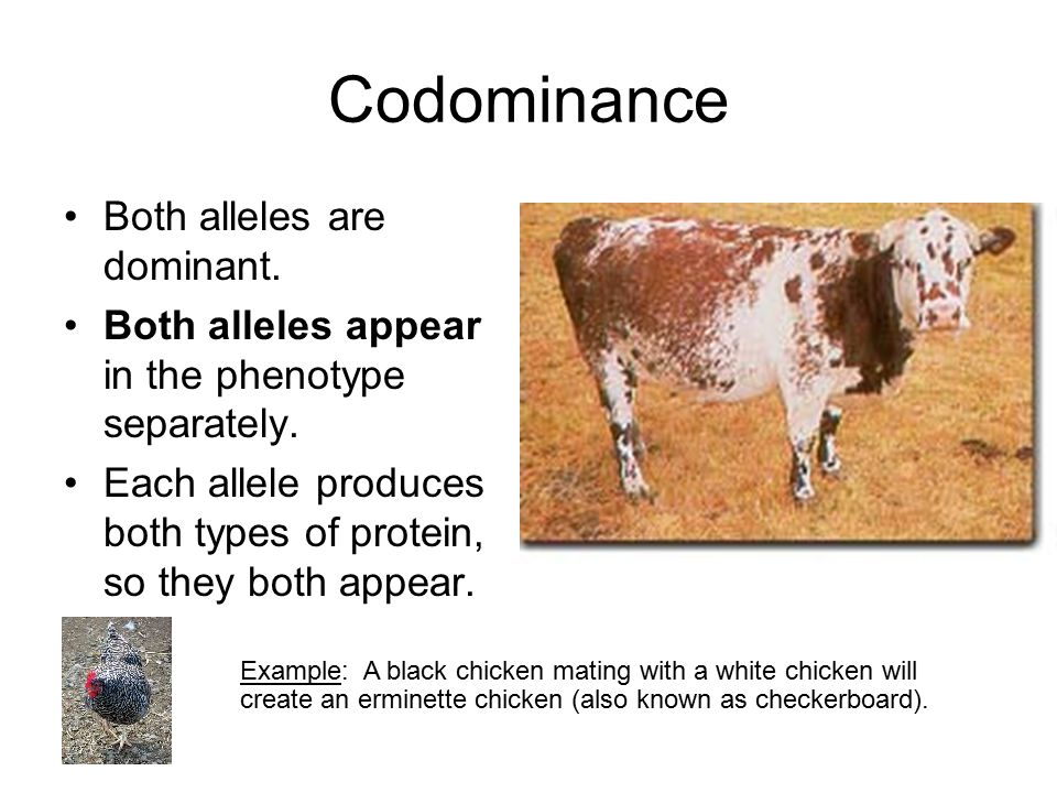 Codominance Both alleles are dominant.