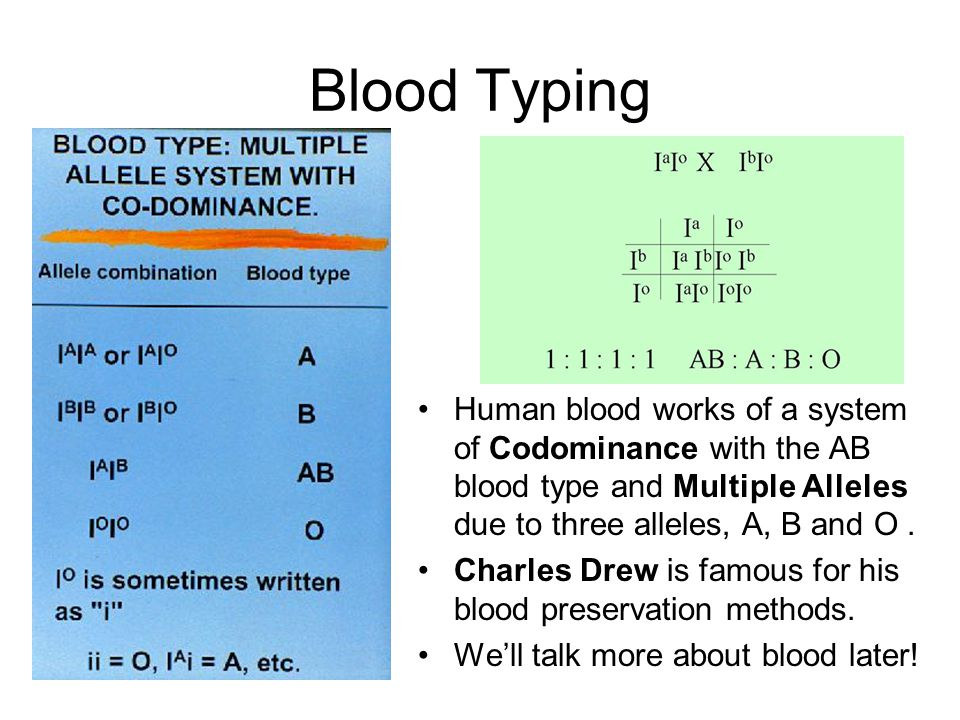 Blood Typing Human blood works of a system of Codominance with the AB blood type and Multiple Alleles due to three alleles, A, B and O .
