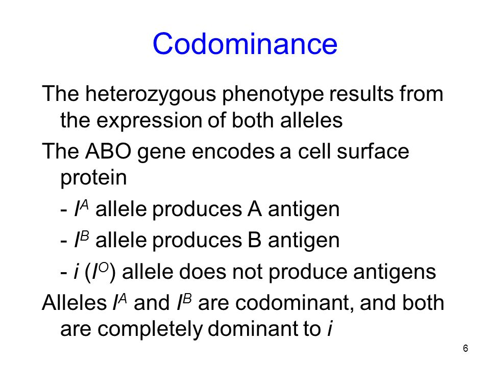 Codominance The heterozygous phenotype results from the expression of both alleles. The ABO gene encodes a cell surface protein.