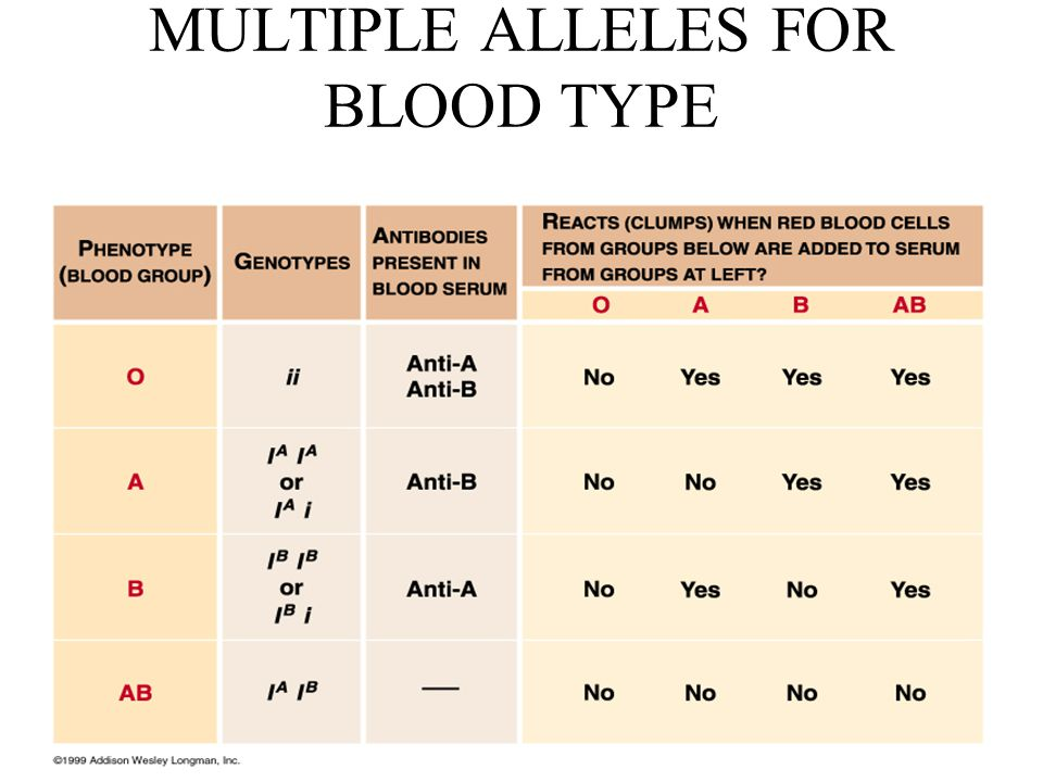 MULTIPLE ALLELES FOR BLOOD TYPE