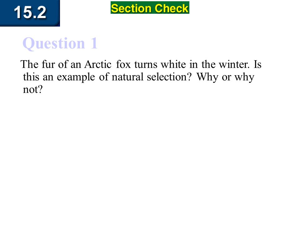 Question 1 The fur of an Arctic fox turns white in the winter.