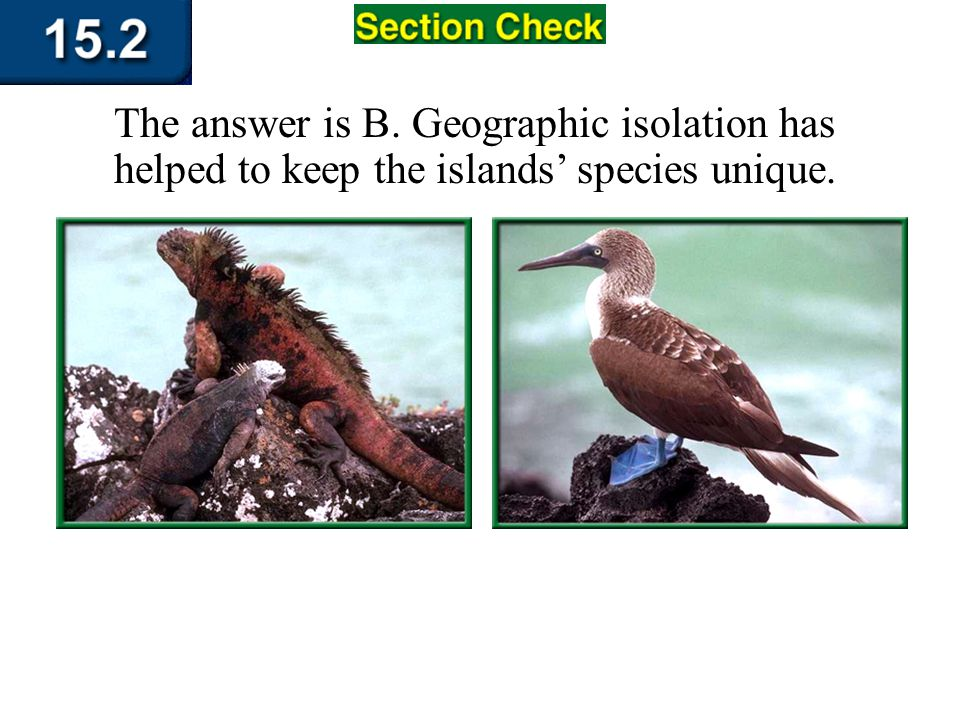 The answer is B. Geographic isolation has helped to keep the islands' species unique.