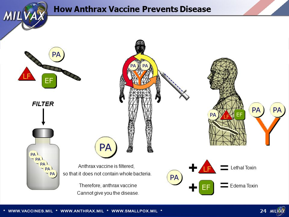 How Anthrax Vaccine Prevents Disease