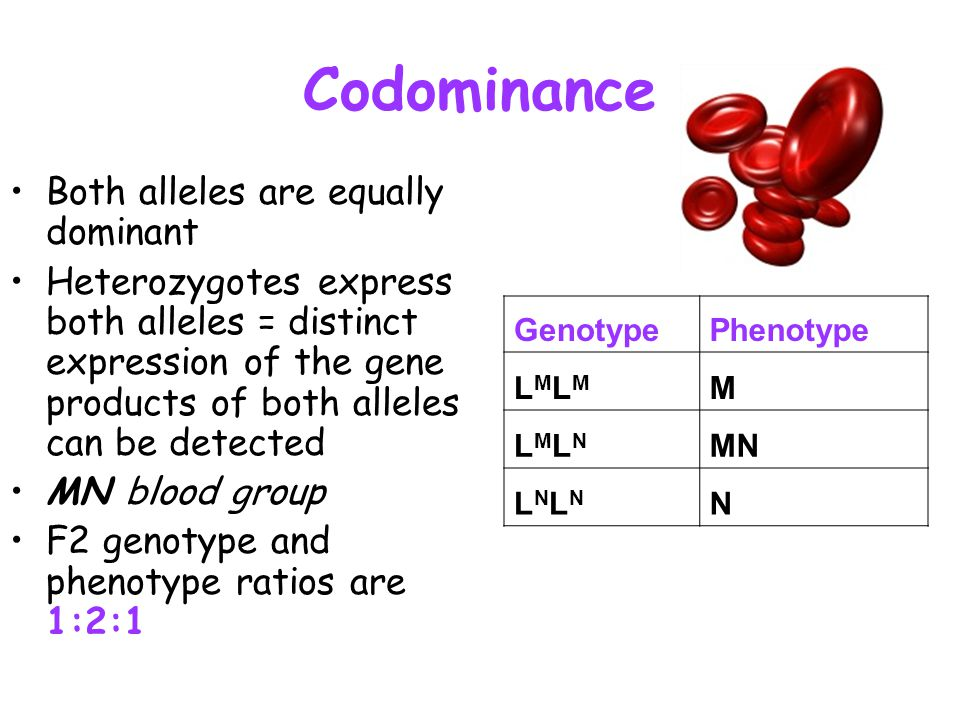 Codominance Both alleles are equally dominant
