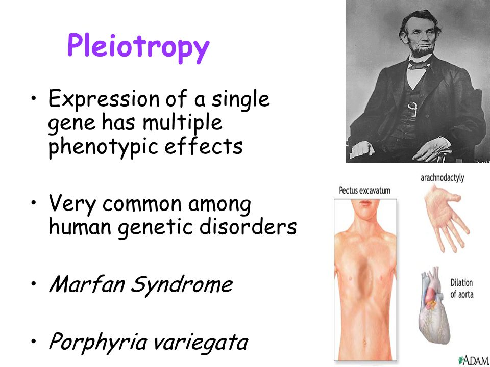 Pleiotropy Expression of a single gene has multiple phenotypic effects