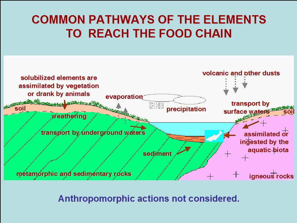 COMMON PATHWAYS OF THE ELEMENTS TO REACH THE FOOD CHAIN