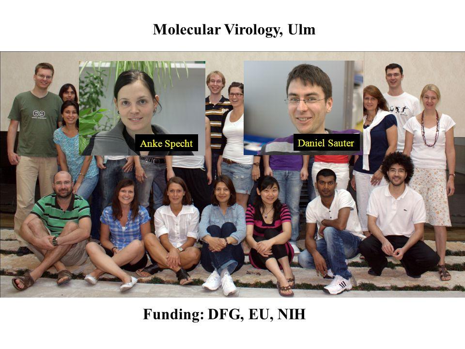 Molecular Virology, Ulm