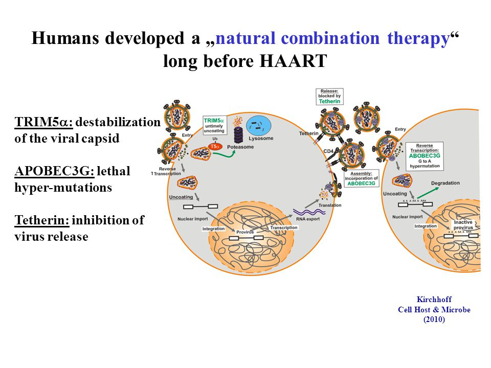 "Humans developed a ""natural combination therapy long before HAART"
