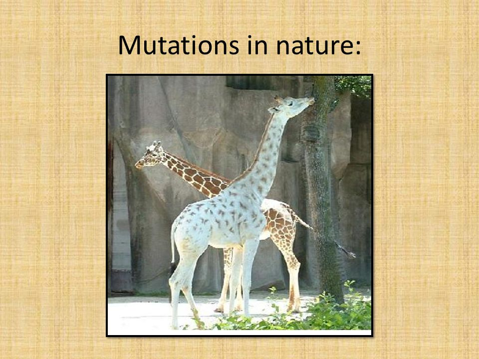 Mutations in nature: