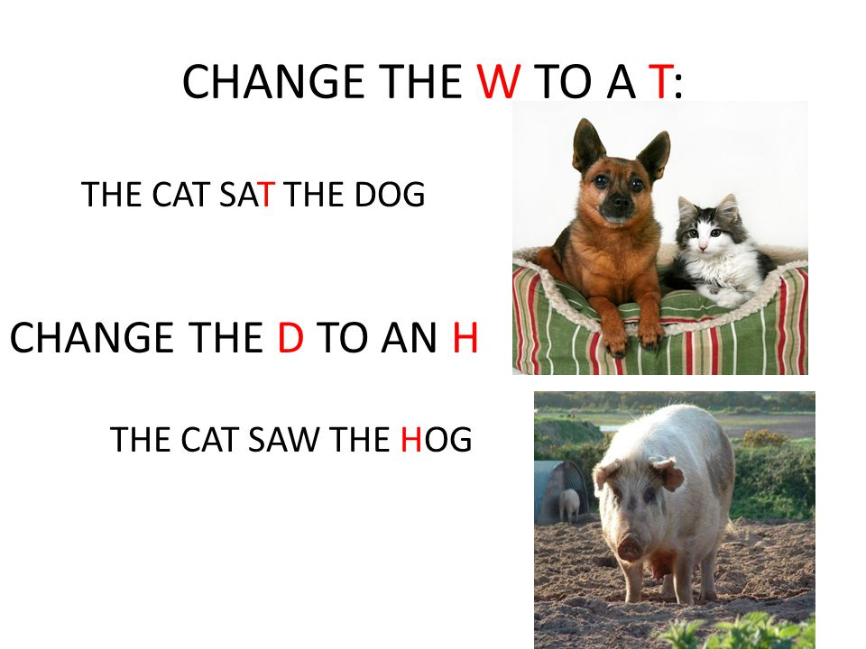 CHANGE THE W TO A T: CHANGE THE D TO AN H THE CAT SAT THE DOG
