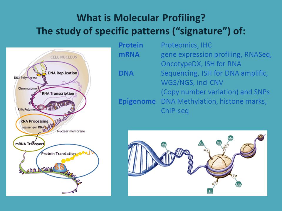 What is Molecular Profiling