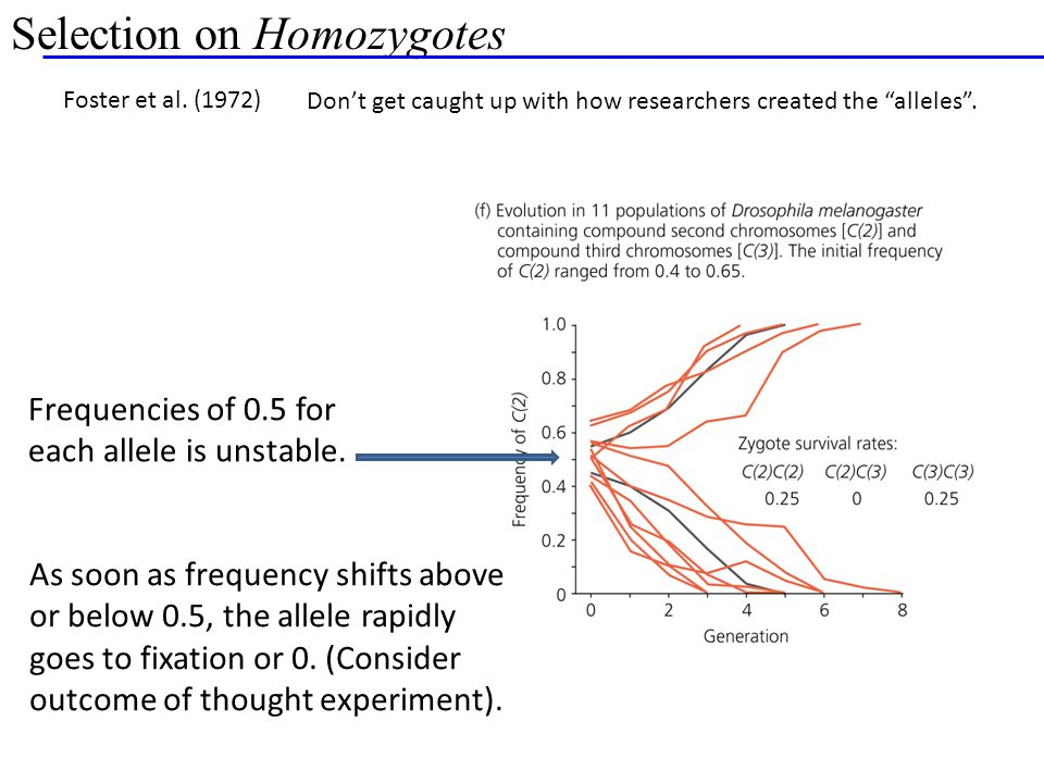 Selection on Homozygotes