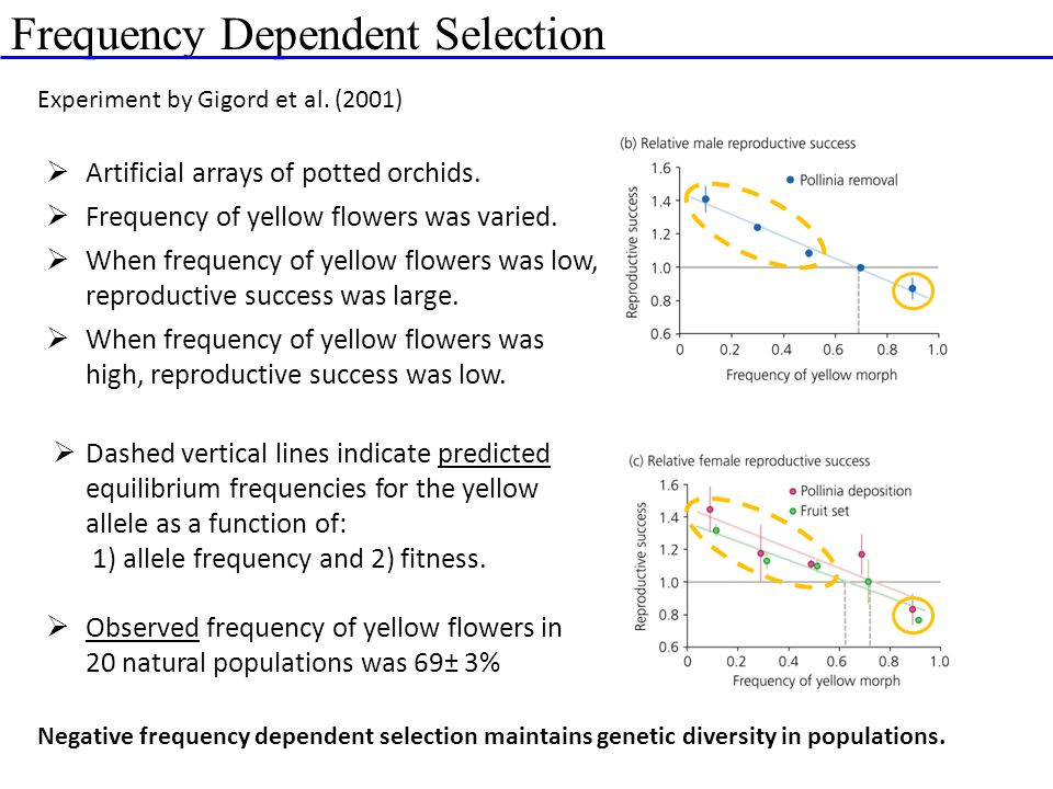 Frequency Dependent Selection