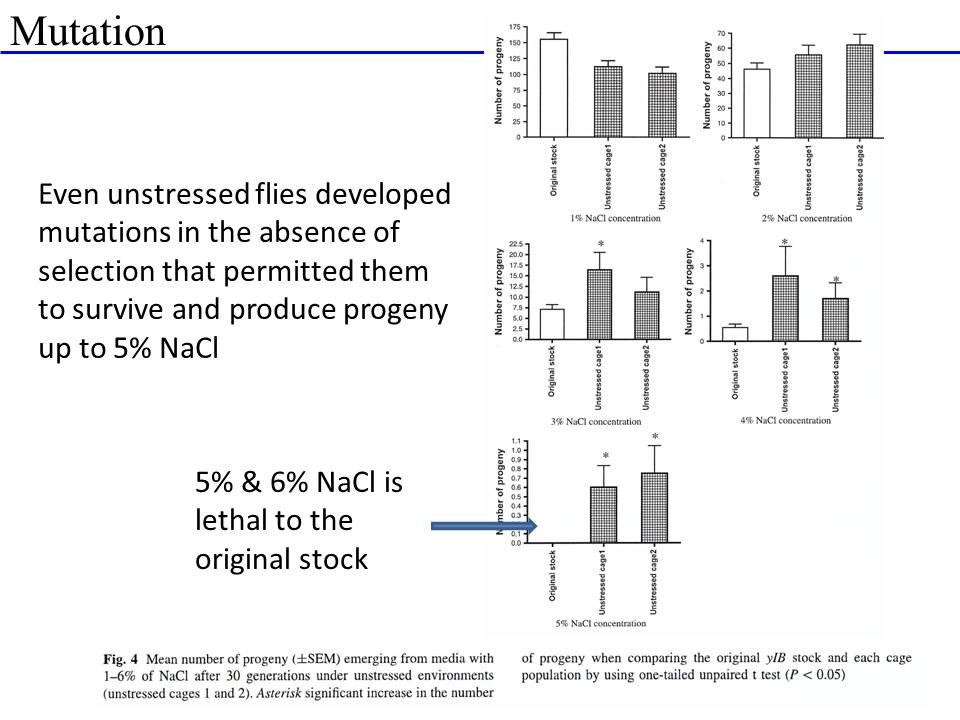 Mutation Even unstressed flies developed mutations in the absence of selection that permitted them to survive and produce progeny up to 5% NaCl.