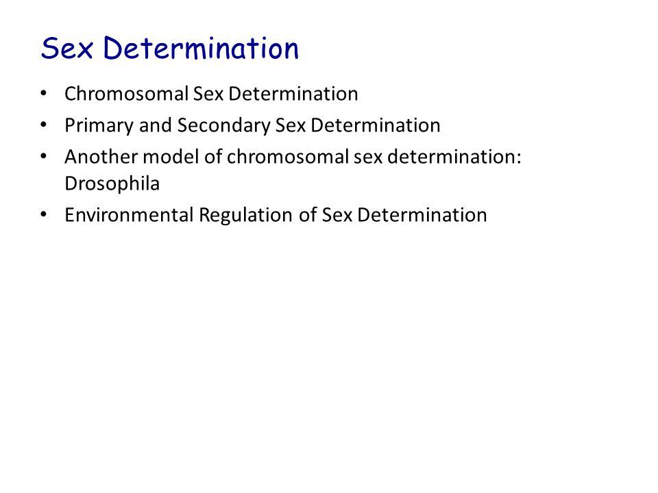 Sex Determination Chromosomal Sex Determination