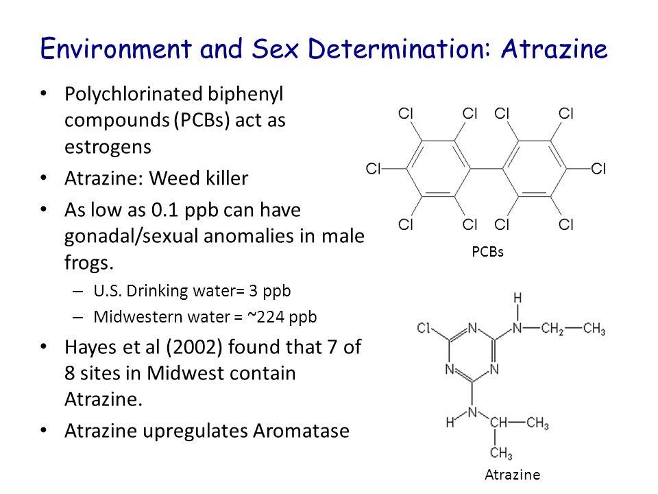 Environment and Sex Determination: Atrazine
