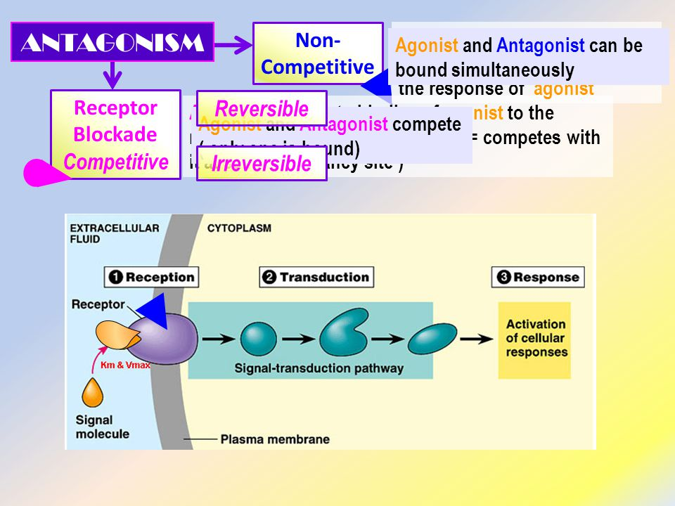 ANTAGONISM Non-Competitive Receptor Blockade Reversible Competitive