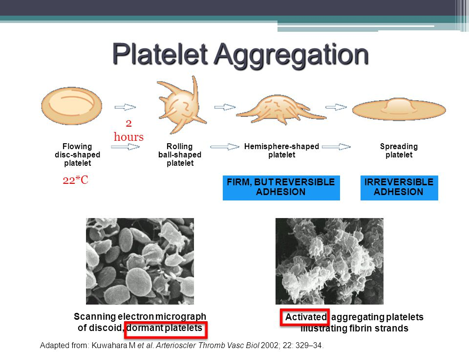 Platelet Aggregation 2 hours 22*C FIRM, BUT REVERSIBLE ADHESION