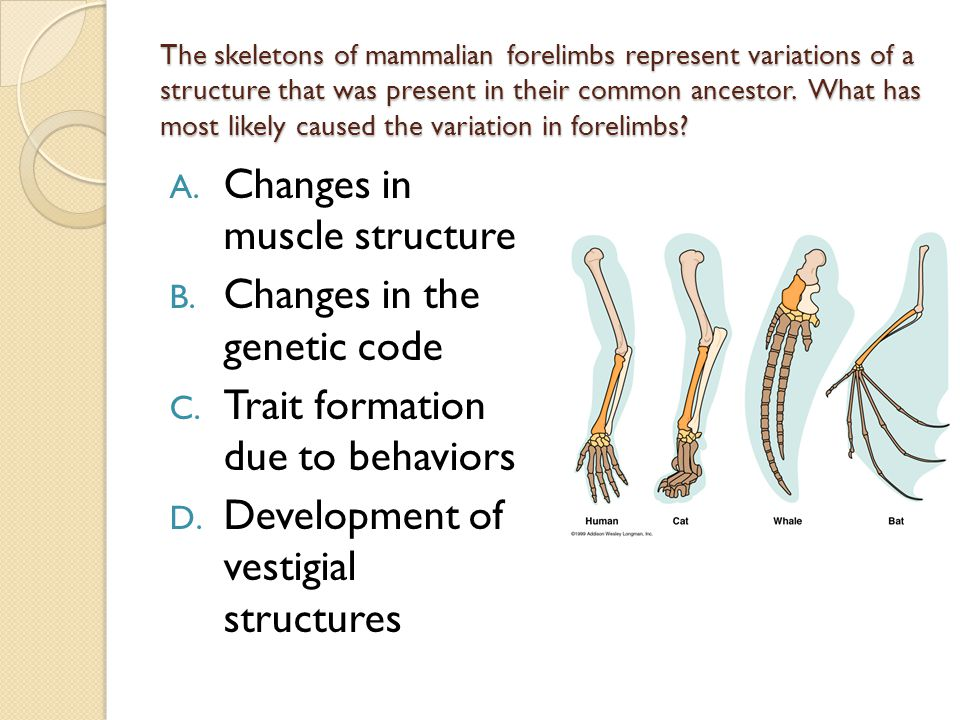 Changes in muscle structure Changes in the genetic code