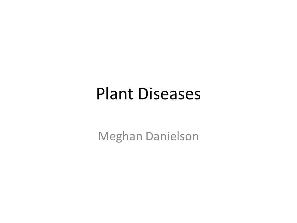 Plant Diseases Meghan Danielson