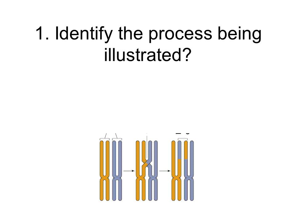 1. Identify the process being illustrated